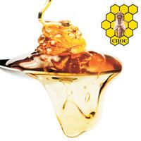 belgrade beekeeping1
